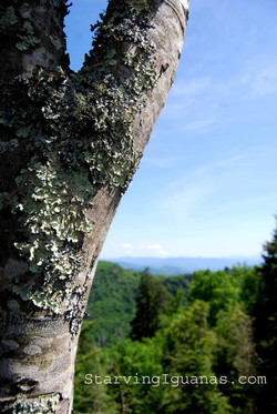"[209]   ""Lichen with a View"""