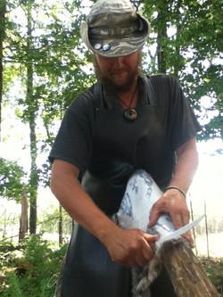 Fleshing a rabbit pelt