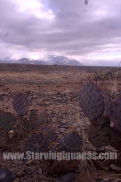 """[154]   """"Purple Cactuses"""""""