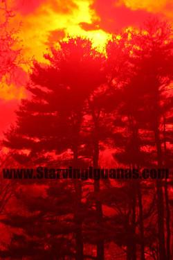 """[42]   """"Firey Eye in the Sky"""""""