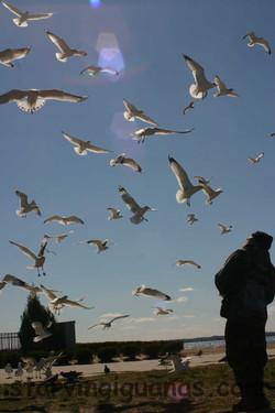 "[14]   ""Matthawk vs. The Seagulls"""