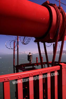 """[138]   """"Barbed Golden Gate"""""""