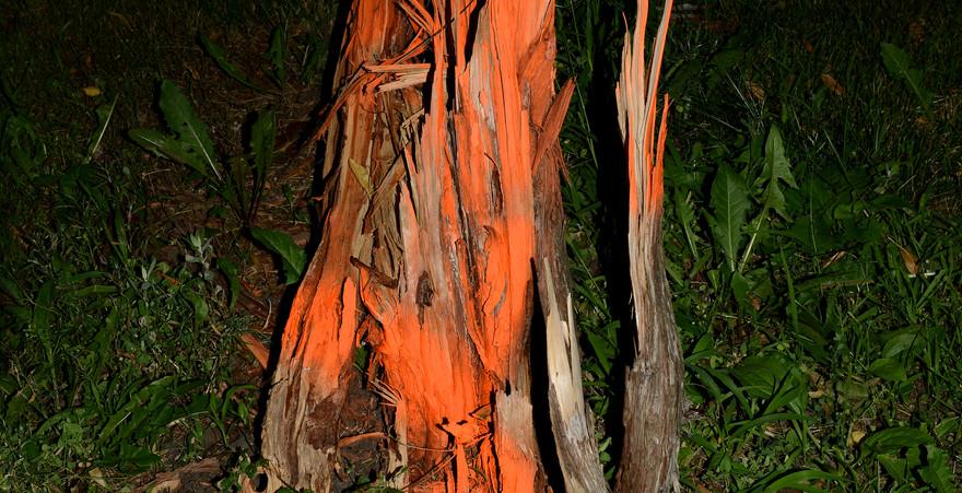 Paula McCarntey orange stump.jpg