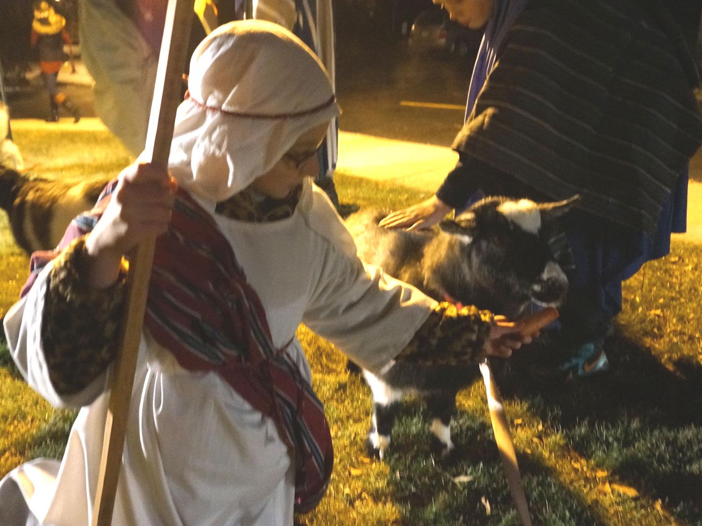 goats5.jpg