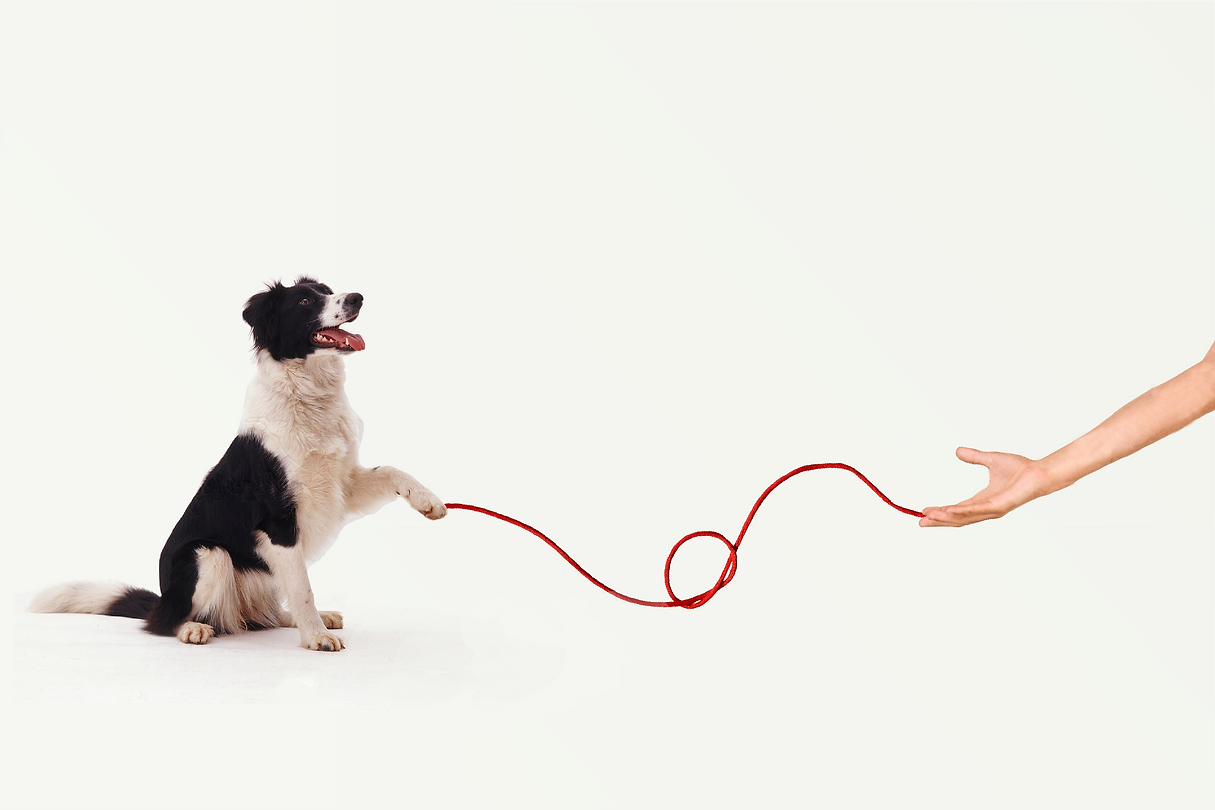Ad Campaign - Dog.png