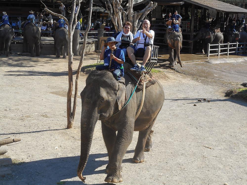 campo degli elefanti di Mae Tang