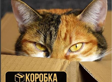 Коробка – умный сервис хранения вещей