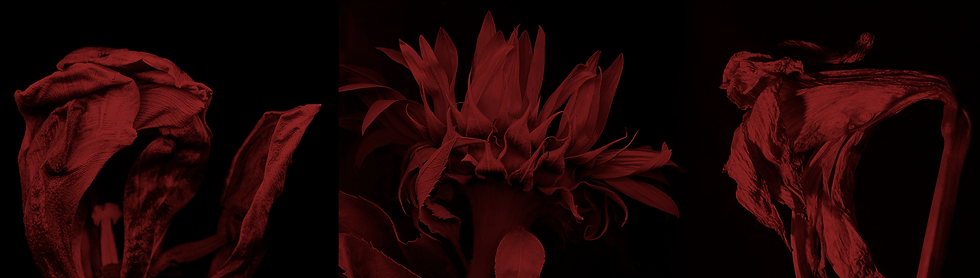 FLOWERS_HEADER_RD.png