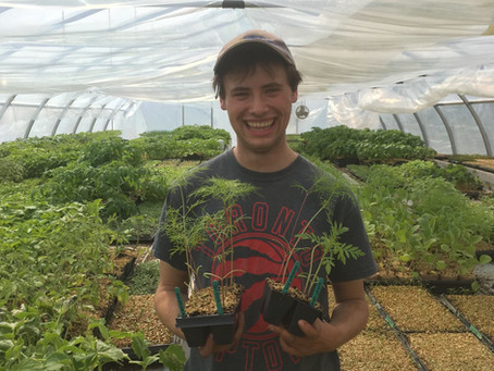 Sunny Weekend Seedling Sale at the Farm!