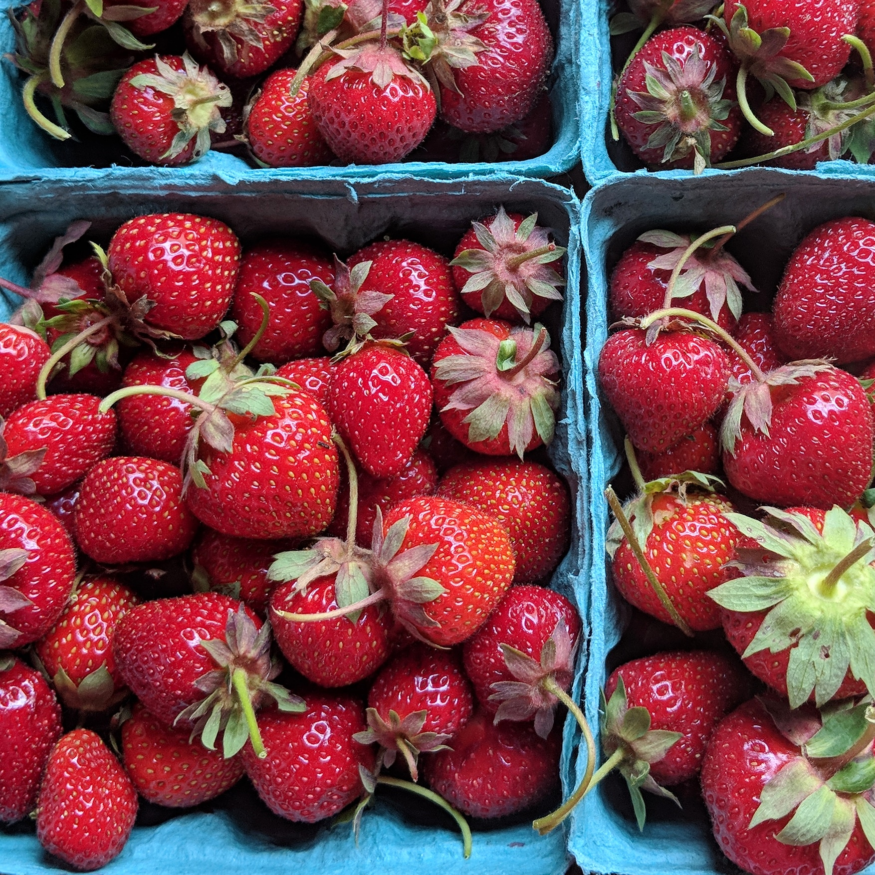 Greig Farm Strawberries