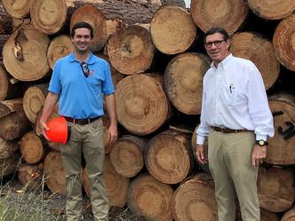 Mill restart looks to Louisiana for pine