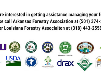 MFFI puts forest management for families