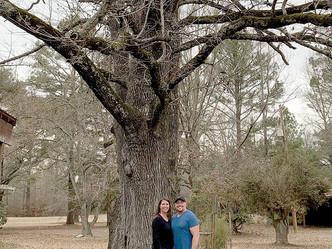 New champion trees make state's list