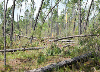 Laura's $1.1B economic blow to forest industry