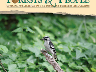Woodpeckers designed for life with wood
