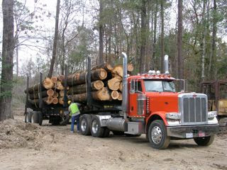 Details in works for timber harvest permit