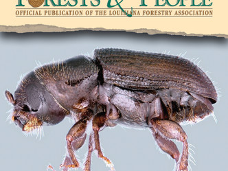 Southern pine beetle found west of Mississippi River