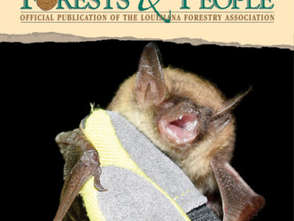 Can bats be repopulated?