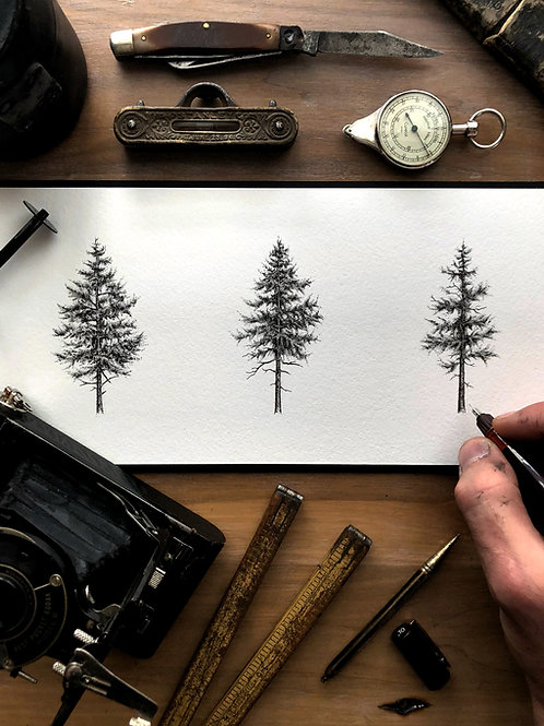 3 Pines