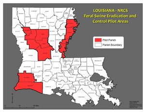 Priority areas for feral swine in Louisiana