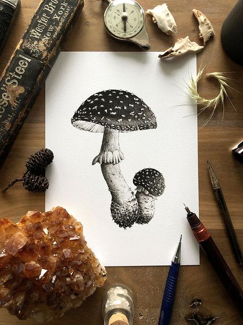 Mushroom Samba