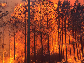 Reward offered for information on timber fire