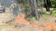 Prescribed burn workshop set