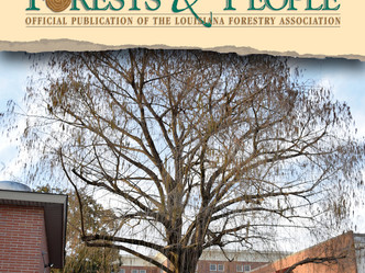 New cypress tree added to state champion list