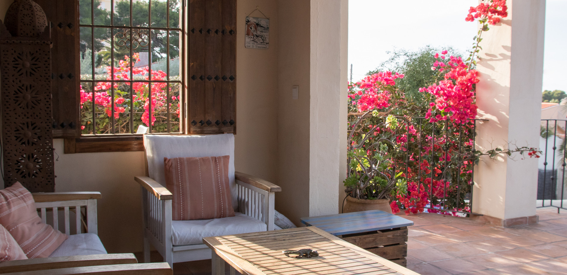 bourgainvillea on the terrace web.jpg
