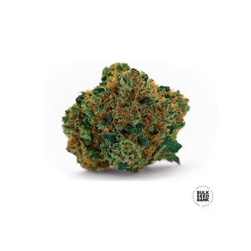 Grapefruit (10 Seeds)