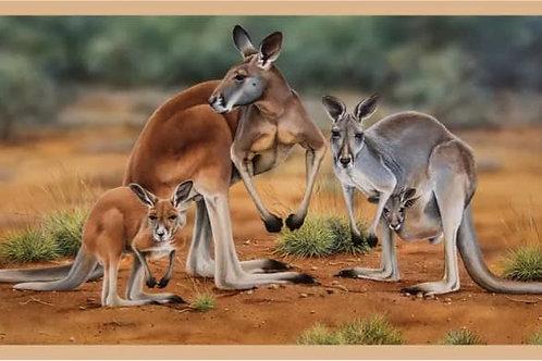 Australian Native Wildlife Panel Kangaroos