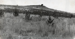 1944 Plantaciones Cerro Zacayucan