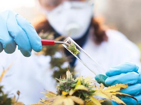 Health Conditions Medical Marijuana Can Treat