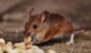 animal-blur-close-up-cute-209112.jpg