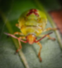Pest Control Canada.jpg