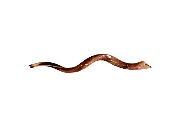 Shofar - medium