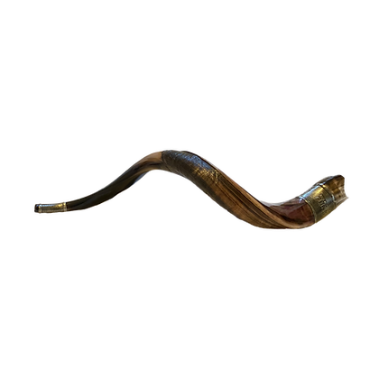 Shofar Special - 65 CM - Jehova and crown