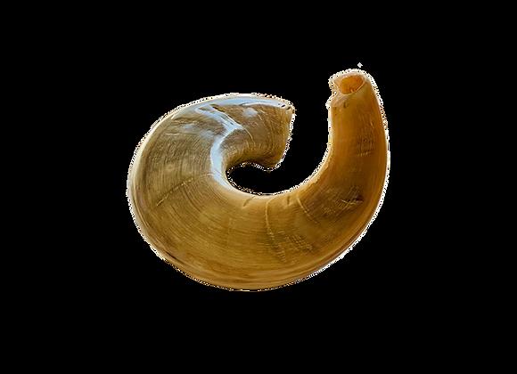 Ram's Horn - large