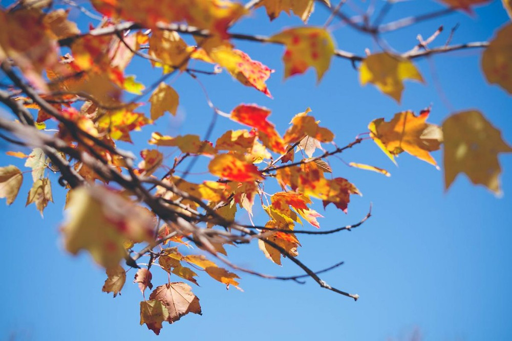 Fall Conventions and Fall Leaves