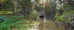 hiking-western-maine-bethel-community-fo