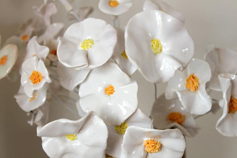 "Fleur ""blanche"""