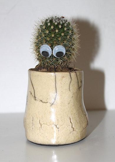 Pot à cactus jaune
