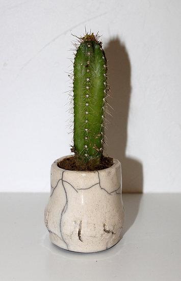 Pot à cactus blanc