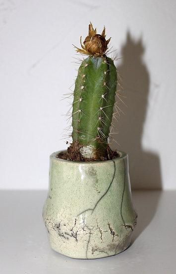 Pot à cactus vert