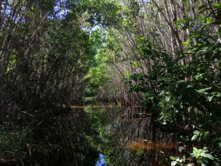 Proponen ley para proteger los cenotes