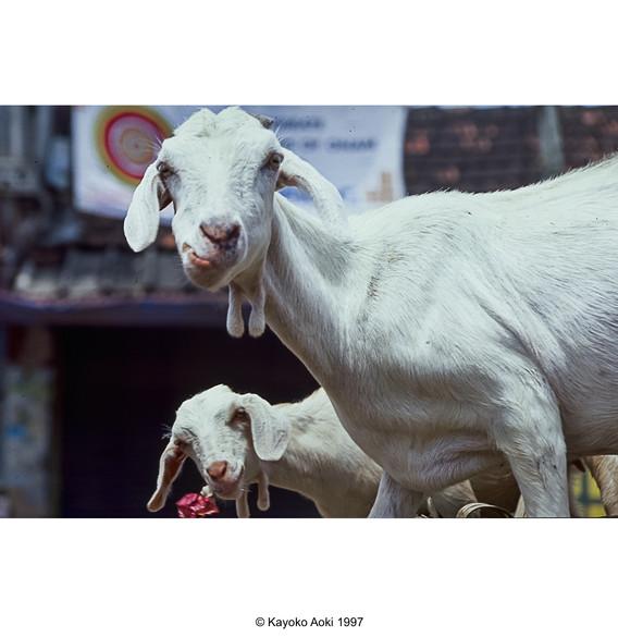 india005.jpg