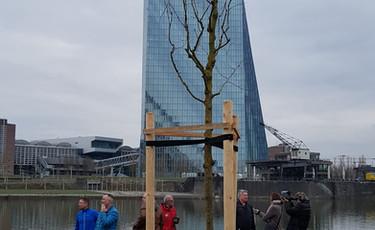 1. TREE of MEMORY für David Kaivers 31.03.18