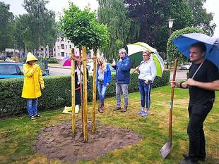 Ginko-Baum für Martin Spörel