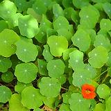 Cluster di foglie verdi