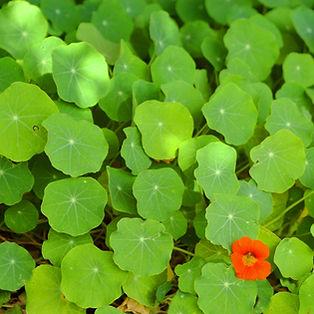 緑の葉のクラスタ